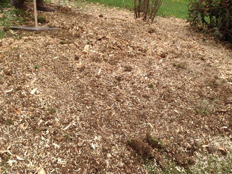 Rognage de souches pau 64 despaux cr ation jardins for Paysagiste pau